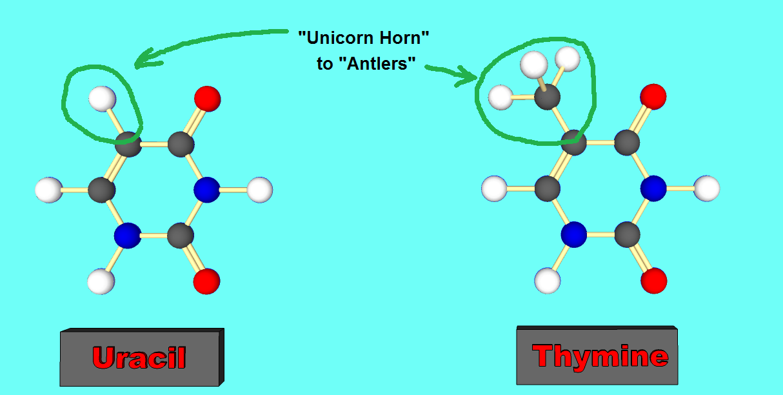 Molecule Maker: Uracil   Engineer Zero  Molecule Maker:...